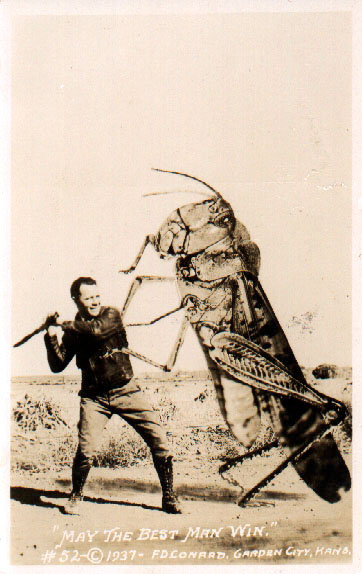 giant grasshopper battle